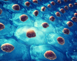Stem Cell Isolation and Culture Services