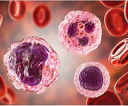 Blood Cell Isolation and Culture Services