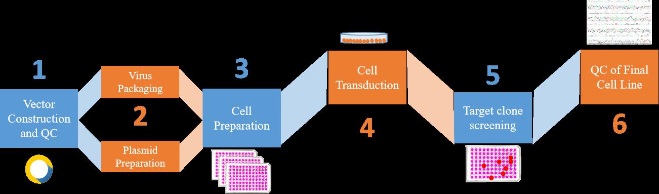 Gene knockdown stable cell construction service process. - Creative Bioarray