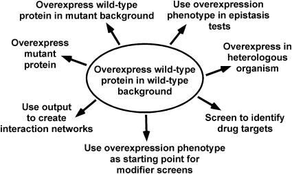 Common uses of overexpression. (Prelich G, et al. 2012)