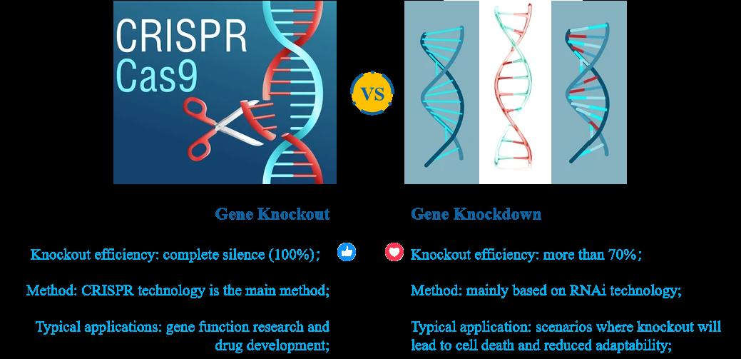 Comparison of gene silencing services. - Creative Bioarray