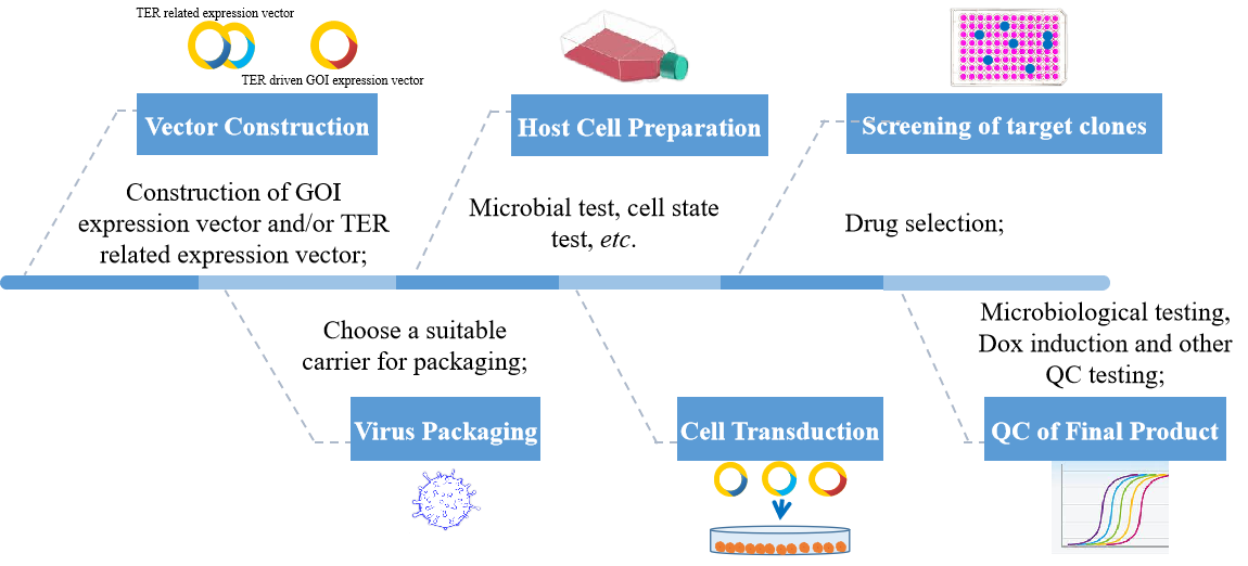 Tet-induced gene expression cell line construction service process. - Creative Bioarray