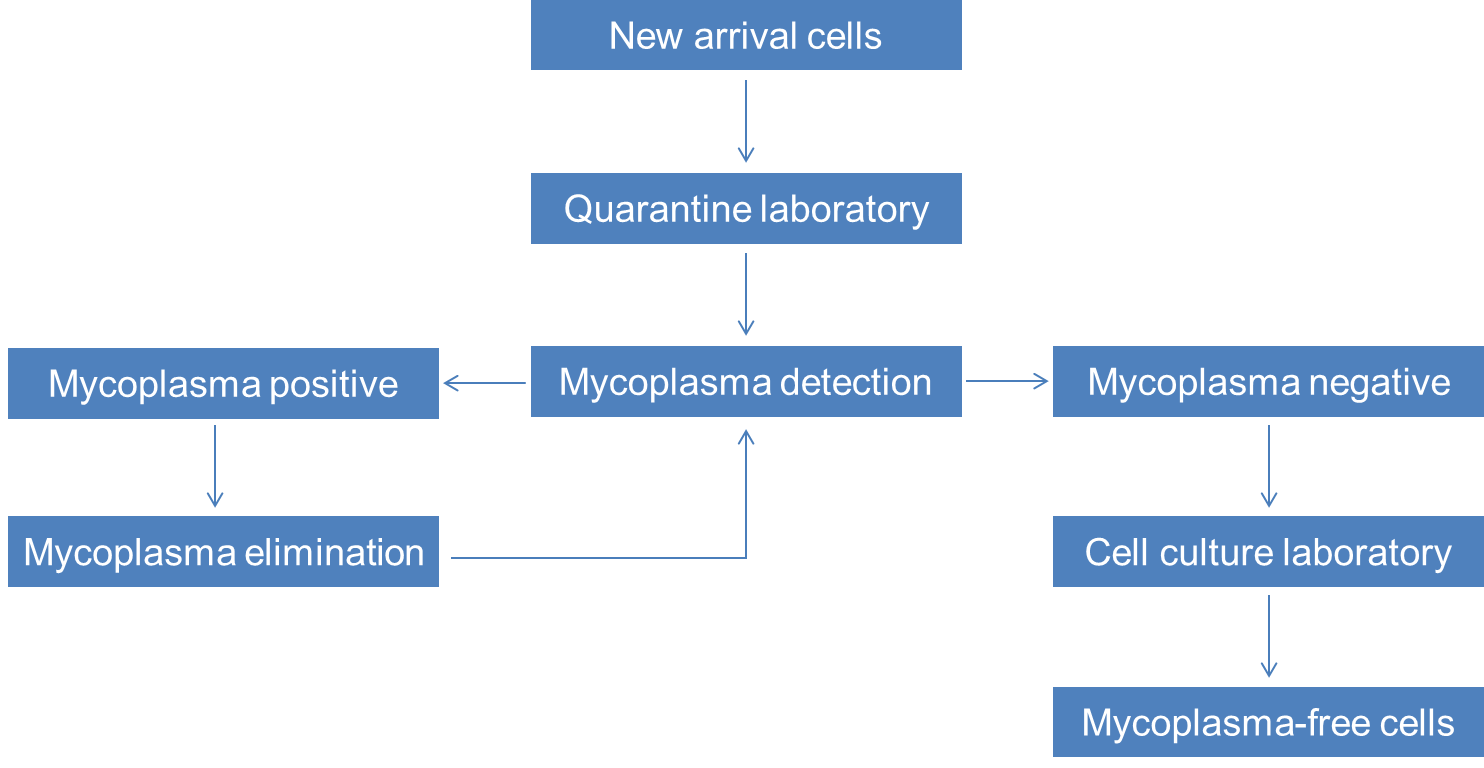 Mycoplasma detection and elimination services flow chart-Creative Bioarray.