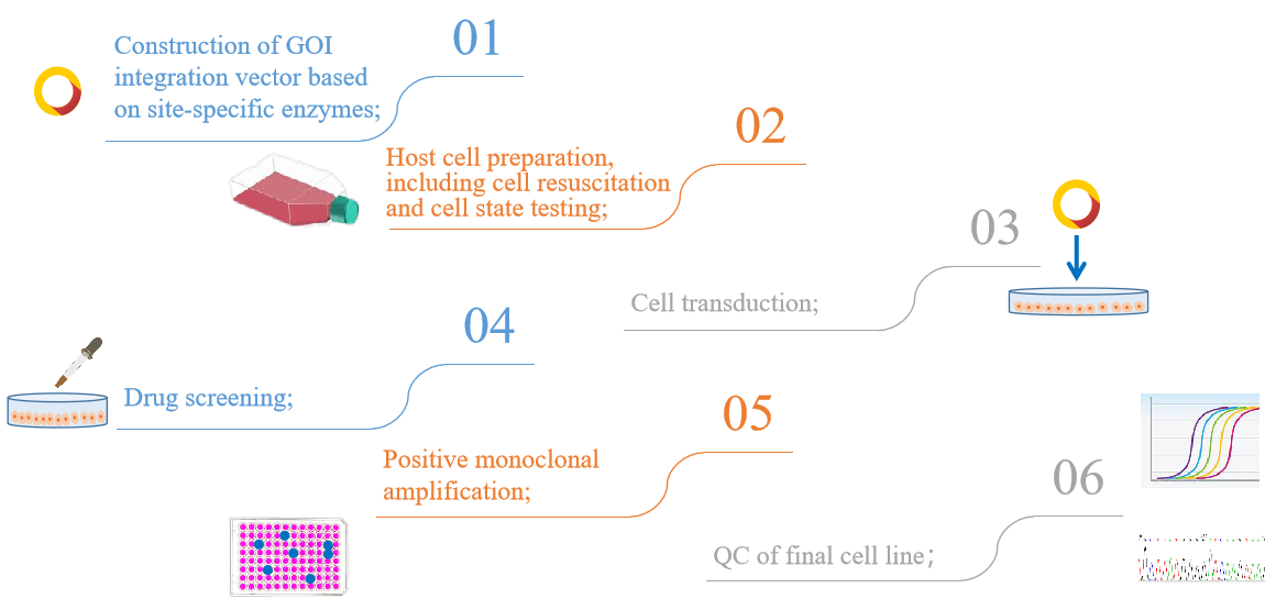 Our site-specific integrated stable cell construction service process. - Creative Bioarray