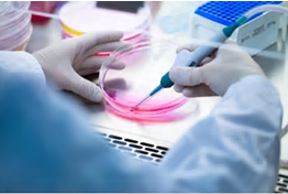 Cell Culture Services