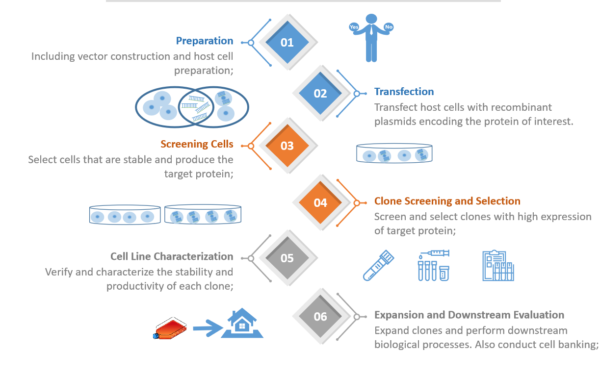 Stable transfection cell line service process. - Creative Bioarray