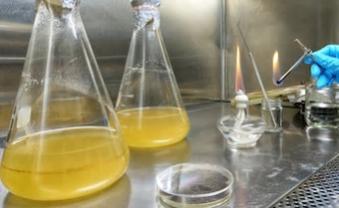 Direct Inoculation Sterility Testing