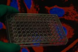 Cell Viability Assays