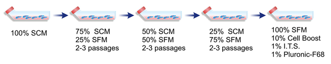 Schematic representation of the serum-free media adaptation process in static T-flasks