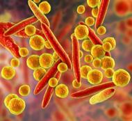 Mycoplasma Testing and Elimination Services