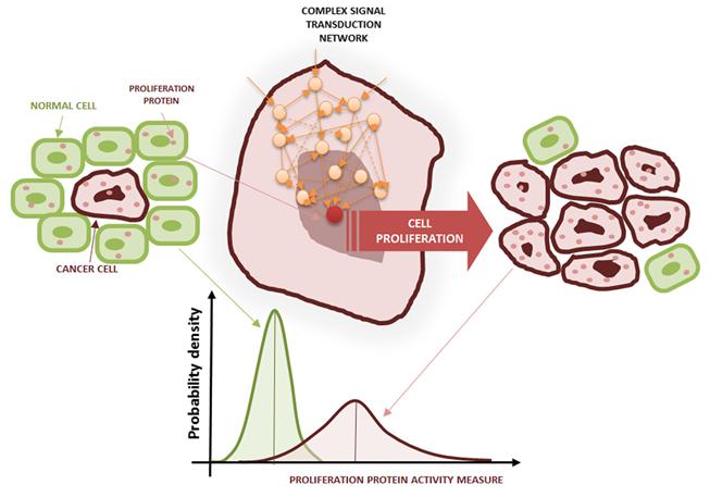 Cancer cell proliferation.