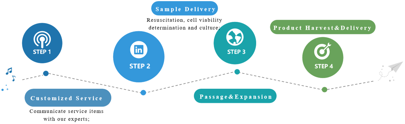 Our large-scale cell culture service process.