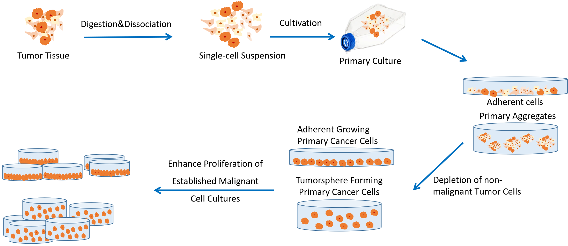 Service flow chart for isolation and culture of primary tumor cells.